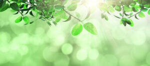3D render of leaves and grass against a defocussed background